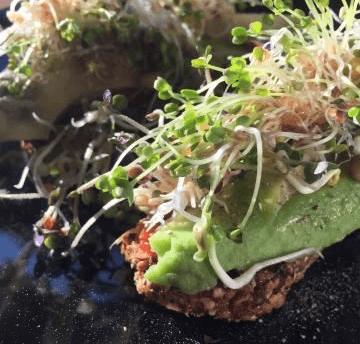 Linda Giese_Veganer Food Blog_sprossen-gesundheit-von-der-fensterbank